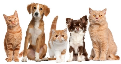 Pet Dander Triggers Asthma